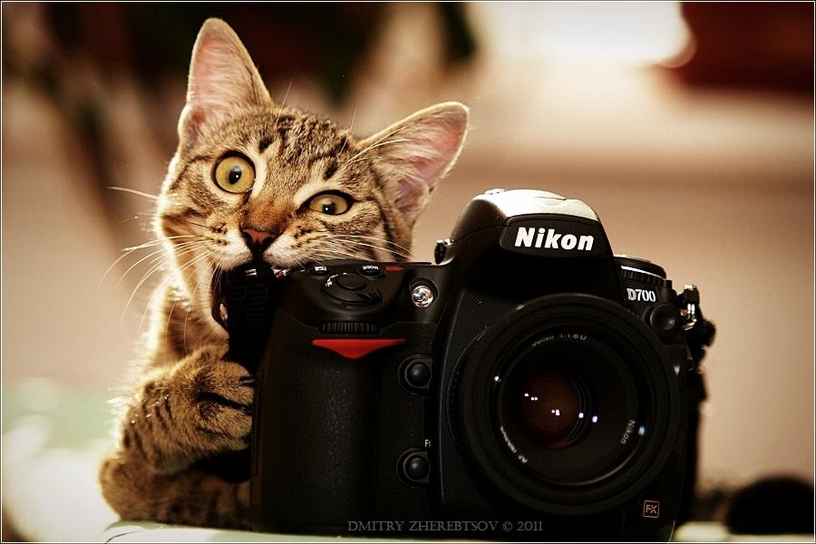 котик ест камеру